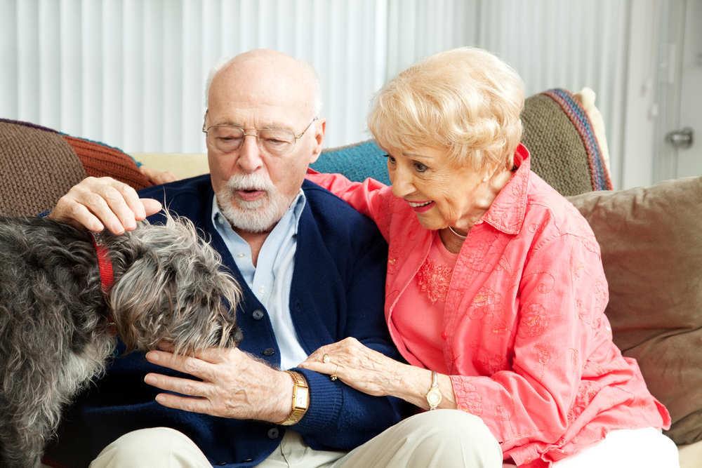 Los animales y las terapias.