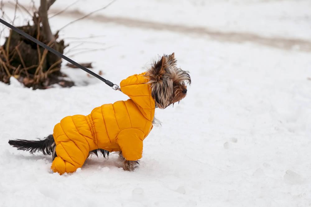 Cómo comprar un buen abrigo para tu perro