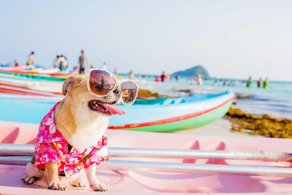 Gafas de sol para mascotas, más que una moda, una cuestión de salud